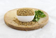 Coriander seeds in a bowl, and spilled seeds, on a wooden table on a crumpled paper. The background has a bunch of fresh and organ Royalty Free Stock Photo