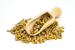 Coriander Seeds Royalty Free Stock Photo