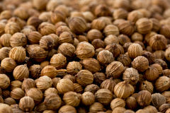 Coriander Seeds (Coriandrum sativum) Stock Image