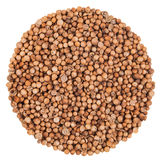 Coriander Seeds Extreme Closeup Isolated Stock Images