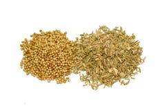 Coriander seeds isolated on white background stock photo