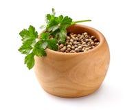 Coriander seeds isolated on white background royalty free stock image