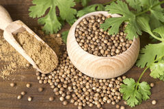 Coriander seeds and leaves Stock Photography