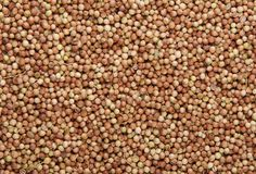Coriander seeds overhead view for background or texture Stock Images