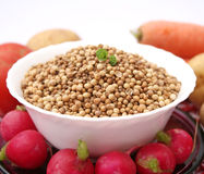 Coriander seeds. Some dried coriander seeds in a bow Royalty Free Stock Photo
