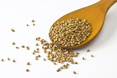 Coriander seeds on spoon. Heap of coriander seeds on wooden spoon and scattered on white background stock images