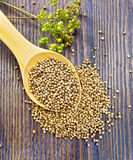 Coriander seeds in spoon on board top. Coriander seeds in a spoon, umbrella immature green coriander seeds on the background of the wooden planks on top Stock Photography