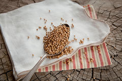Coriander seeds Stock Photos