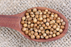 Coriander seeds in a spoon Royalty Free Stock Photography