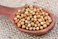 Coriander seeds in a spoon Stock Images