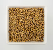 Coriander seeds in a square bowl  on white Stock Image