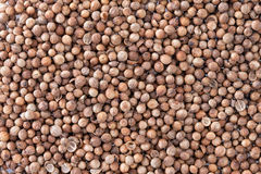 Coriander Seeds texture background. Royalty Free Stock Images