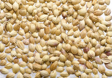 Coriander Seeds in white background Royalty Free Stock Photo
