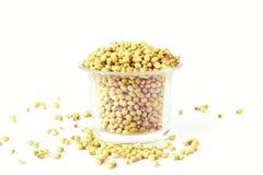 Coriander seeds in white background Stock Photos