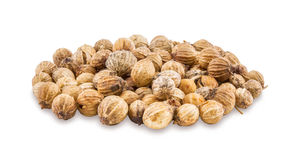 Coriander seeds on a white background. Royalty Free Stock Image