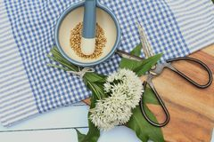 Coriander seeds and wild garlic. Simple still life of organic coriander seeds in a blue and white ceramic pestle and mortar with a gingham table cloth, a bunch Royalty Free Stock Photo