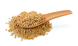 Coriander seeds in wood spoon Royalty Free Stock Photos