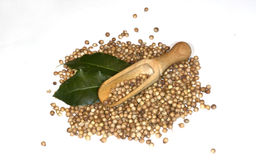 Coriander seeds in a wooden spoon. Feb 7, 2016 Stock Photography