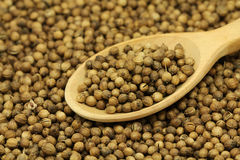 Coriander seeds in a wooden spoon Stock Photos