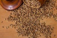 Coriander Seeds Stock Images