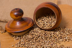 Coriander Seeds. On a wooden table Royalty Free Stock Images