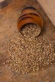 Coriander Seeds Stock Photos