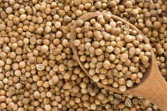 Coriander spices and spoon. As background royalty free stock photo