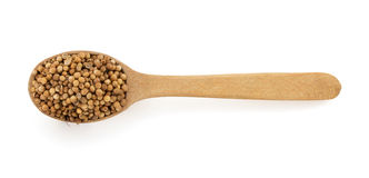 Coriander spices in spoon Royalty Free Stock Photography