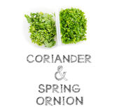 Coriander and spring onion Royalty Free Stock Photo