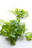 Coriander on table Royalty Free Stock Photo