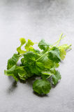 Coriander on table Royalty Free Stock Photos