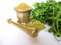 Coriander in various forms. Close of various stages of coriander from fresh green leaves to seeds and powder Royalty Free Stock Photo