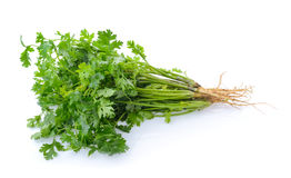 Coriander on white background Royalty Free Stock Photography