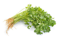 Coriander on white background Royalty Free Stock Photos