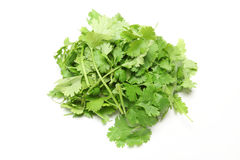 Coriander in a white background Royalty Free Stock Images