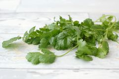 Coriander on the wood Royalty Free Stock Images
