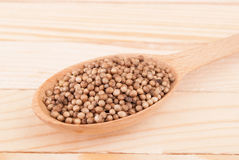 Coriander in a wooden spoon Stock Images