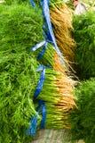 Coriandolo fresco verde Immagini Stock Libere da Diritti