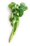 Coriandro o cilantro aislado en blanco Foto de archivo libre de regalías