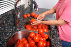 Coring tomatoes for canning. A woman rinses and cores tomatoes for preparation and canning royalty free stock image
