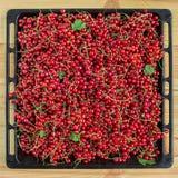 Corinto vermelho na tabela de madeira de Brown Imagem de Stock Royalty Free