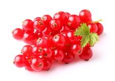 Corinto vermelho no close up fotografia de stock royalty free