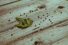 Corintos verdes da folha na tabela de madeira velha Imagem de Stock