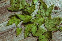 Corintos verdes da folha na tabela de madeira velha Fotografia de Stock