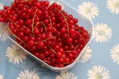 Corintos vermelhos Imagem de Stock Royalty Free