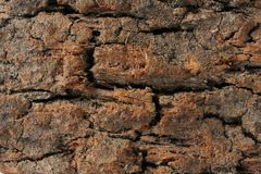 Cork. Closeup to cork bark. Cork background Stock Photo