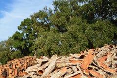 Cork bark Royalty Free Stock Photography