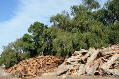 Cork bark royalty free stock photos