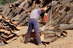 Cork bark production. Freshly stripped cork bark being prepared for harvesting Stock Photography