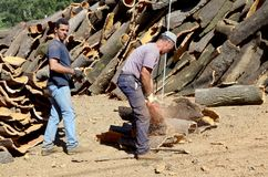 Cork bark production. Portugal, Algarve, Monchique, Circa 27th August 2013. Two men Stripping Cork bark to sell to the cork industry Royalty Free Stock Photo